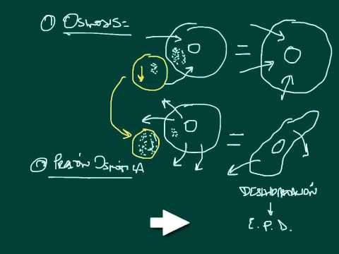 Dibazolum com papaverina proporção da pressão