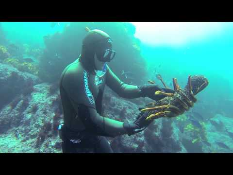 Free diving for crayfish in New Zealand