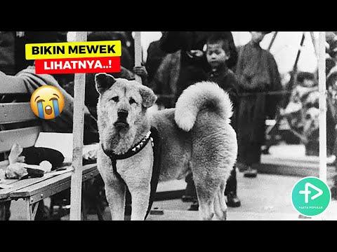 10 Kisah Kesetiaan Anjing Pada Majikannya