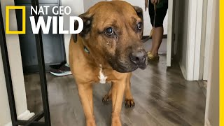 Building a Fearful Dog's Confidence | Dog: Impossible