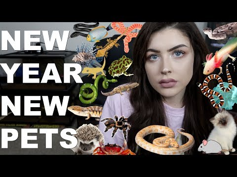 NEW YEAR, NEW PETS. (Animal Room Tour. Again)