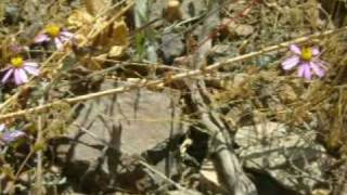 preview picture of video 'Petroglifos de Checta - Libro de Aventuras'