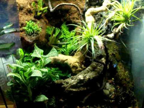 Dart frog vivarium
