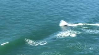 Wow, what's better than a video of wild orcas surfing?!!!
