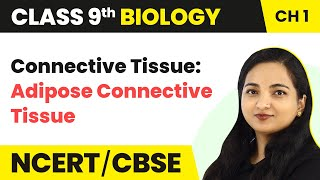Connective Tissue : Adipose Connective Tissue - Tissue   Class 9 Biology