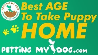 Best Age To Take Puppy Home - Is That 6, 8 or 12 Weeks?