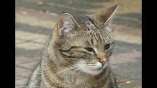 Katze Mimi Fliederbaum