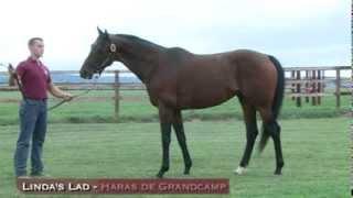 preview picture of video 'Linda's Lad étalon PS au Haras de Grandcamp. Gagnant de Gr1 à 2 ans.'