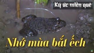 Ký ức Miền Quê   Nhớ Mùa Bắt ếch   THKG