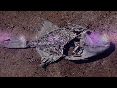 What is the meaning of dead fish in a dream  |  Dreams Meaning and Interpretation