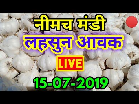 नीमच लहसुन मंडी आवक Live 15-07-2019