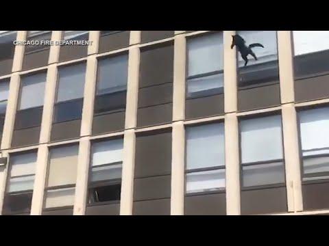 Γάτα πηδάει από τον 5ο όροφο φλεγόμενου κτιρίου… χωρίς να πάθει τίποτα