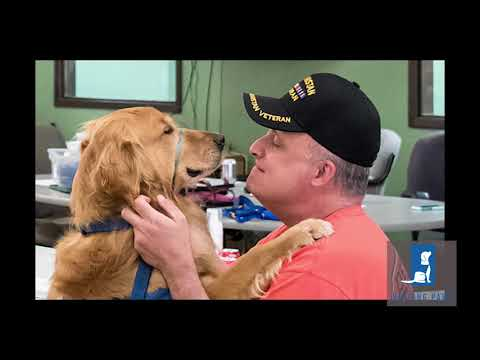 Four veterans speak about the PTSD service dogs who help them move forward by standing at their sides.