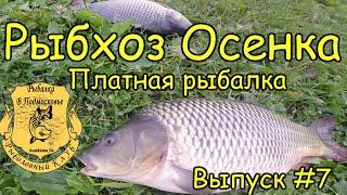 Платная рыбалка в непецино