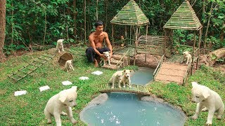 Building Dog Playground and Build Mini Swimming pool for Dogs