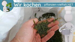 Brennnessel - Samen Ernte & Aufbewahrung-Tipps (Brennnesselsamen ernten, essen, ...)