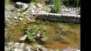 Wassergarten im Frühjahr – Sommer