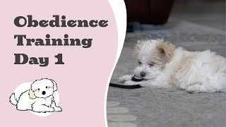 Maltipoo Puppy Obedience Training  - Day 1 (The beginning)