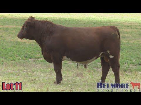 BELMORE QUANTUM Q255