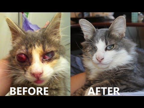 The Story Of Mad Eye, My One-eyed Kitty..