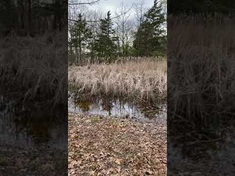 Video Of Danville Conservation Area, MO