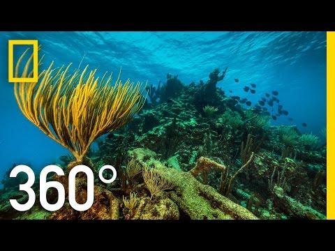 Underwater National Park 360°
