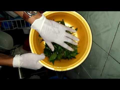 Video cara membuat jamu deuretik dengan daun kumis kucing