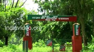 Rajaji National Park near Haridwar, Uttarakhand