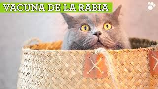 Tienda Animal Vacunas para gatos: cuáles y cuándo ponerlas anuncio