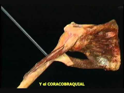 Dolor de lado izquierdo y de la parte posterior da el abdomen