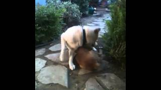 """[Video #2: River plays w/pup] """"The James Bond of dogs"""" Needs A Place To Call Home!"""