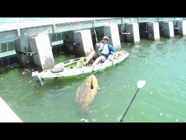 اصطياد سمكة ضخمة يوقع الصياد في ورطة