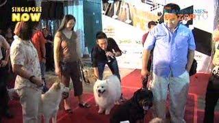 Furry Fashionistas (Runway Pets Pt 3)