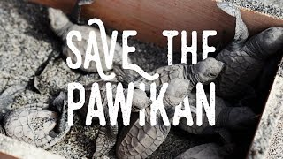Pawikan Festival: Help Save the Pawikans! (Morong Bataan, Philippines)
