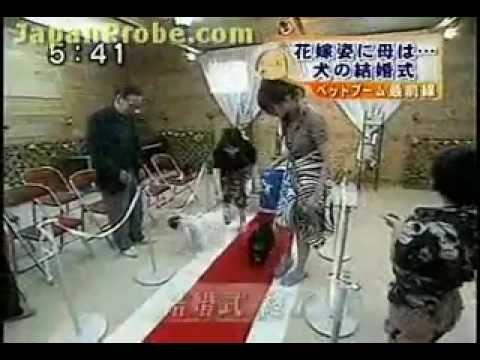 Weird Japanese Dog Wedding
