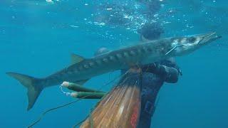 Podvodni Ribolov - Barakuda 4kg