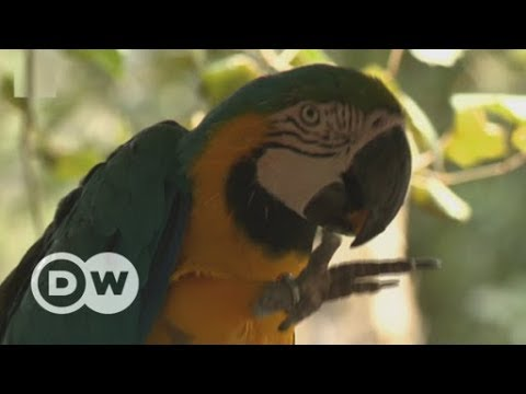South Africa: A sanctuary for injured birds | DW English