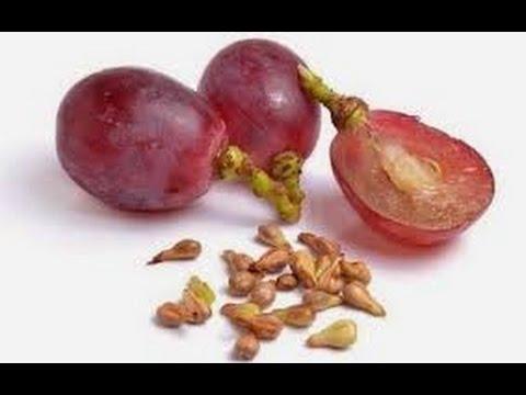 Video Inilah 12 Manfaat Biji Anggur untuk Kesehatan Tubuh