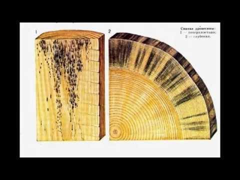 Пороки древесины - трещины, сучки и другие пороки дерева
