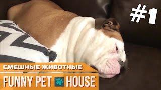 СМЕШНЫЕ ЖИВОТНЫЕ И ПИТОМЦЫ #1 СЕНТЯБРЬ 2018 [Funny Pet House] Смешные животные