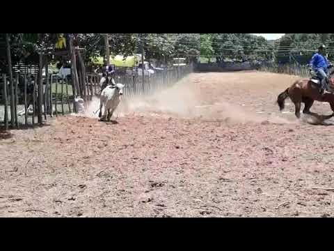 Vaquejada em areias em novo oriente Piauí