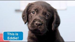 Sponsor a Puppy - Eddie