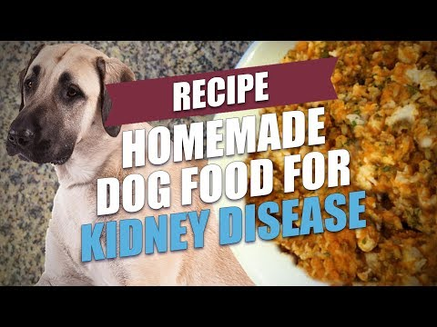 Video Homemade Dog Food for Kidney Disease Recipe
