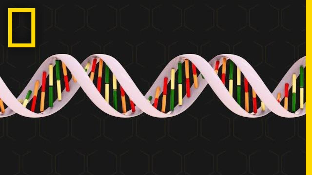 Genetics 101 | National Geographic thumbnail