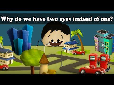 Зрение строение глаза функции