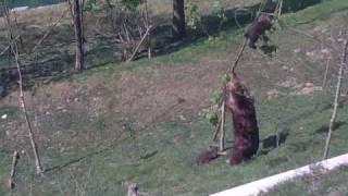 Случай в Парке Медведя