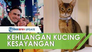 Kehilangan Kucing Kesayangan, BCL Tulis Pesan Menyentuh hingga Titip Salam untuk Ashraf Sinclair