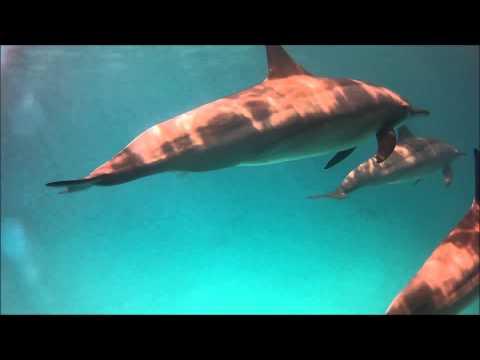 Schnorcheln mit Delfingen - Rollei 5S, Sataya Dolphin Reef,Ägypten