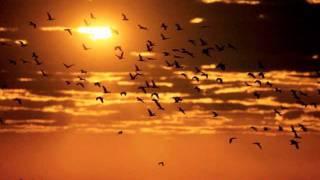 اغاني طرب MP3 Mohammad Qwaider / Blad El Asafeer 2012 محمد قويدر / بلاد العصافير تحميل MP3