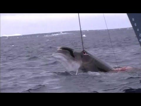 3o lago di quantità da pesca russo